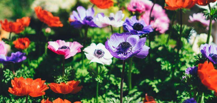 Festival de Jardines de la Costa Azul