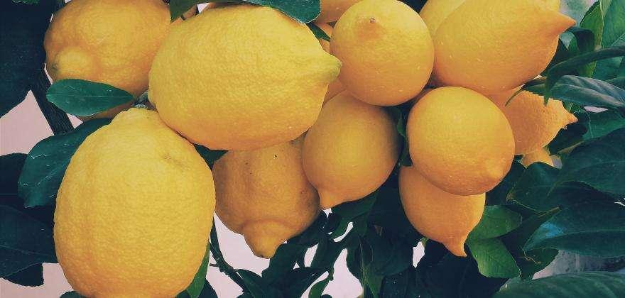 Zitronenfest in Menton